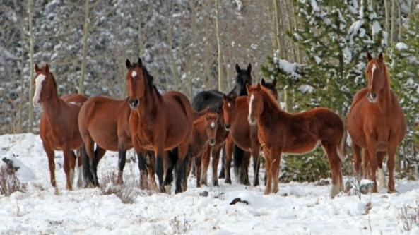 Photo: Wild Horses of Alberta Society
