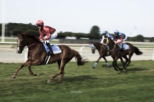 Horses In Racing