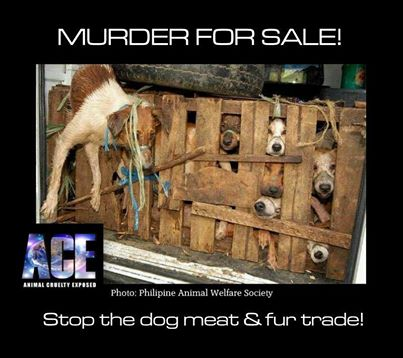 murder_for_sale