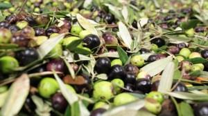 olives-e1405713466550