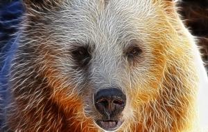 bear-90479_640