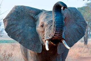 elephant obama ndrc