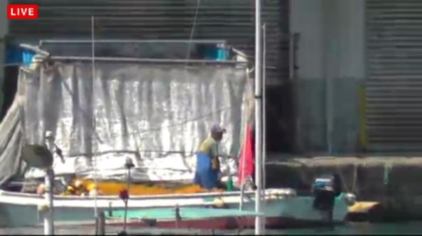 Dolphin hunters carefully transfer the dead, and half dead bodies of a Risso's dolphin family through deaths door. by SSCG's September 16,2014 Livestream