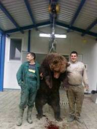 Psychopaths bears