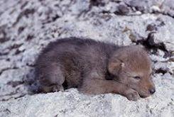 Harvey Nichols coyote flog
