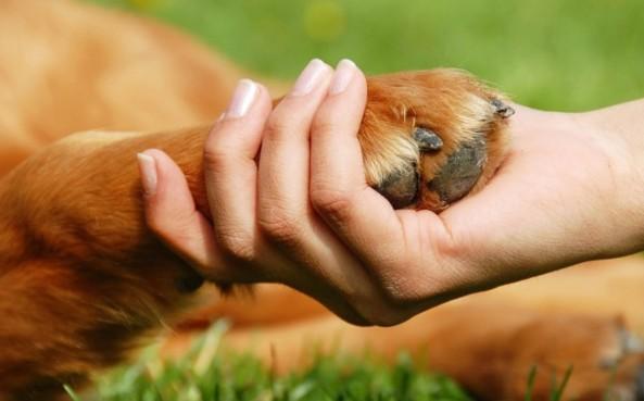 photodune-1097775-dog-paw-and-hand-shaking-s-e1358957029677-1200x747