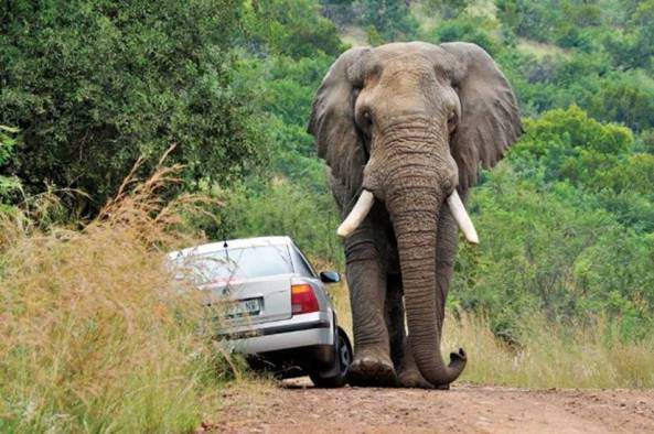 African Road Rage003