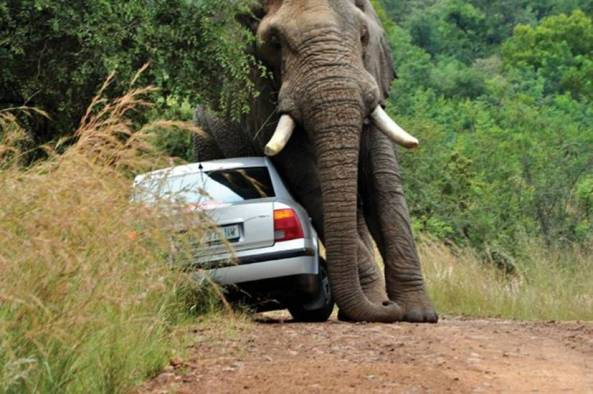 African Road Rage004