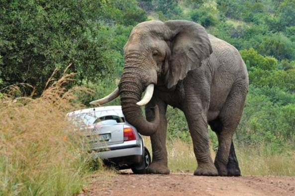African Road Rage005