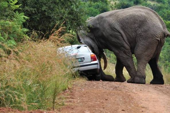 African Road Rage006