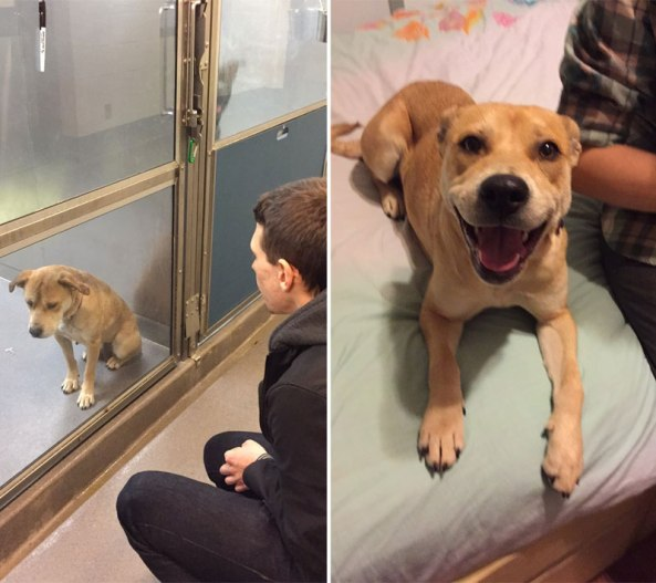 before and after pics of adopted dogs (1)