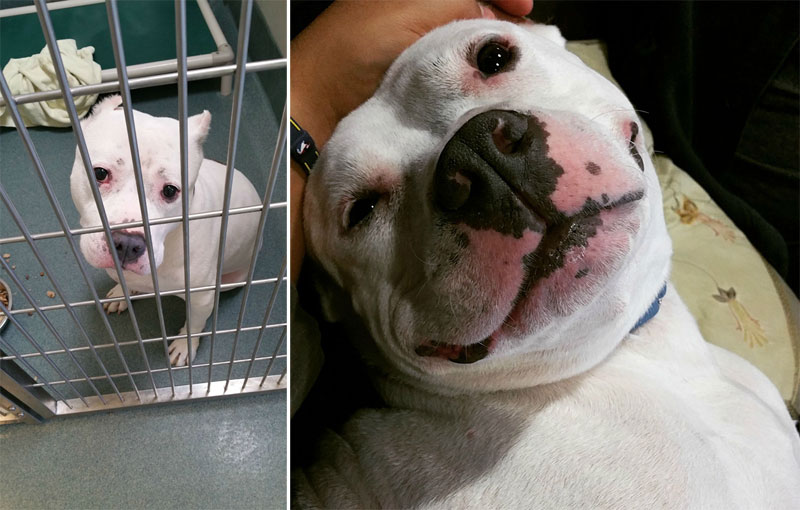 before and after pics of adopted dogs (15)