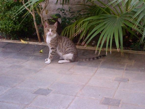 friendly cats adopt a pet in Oman.jpg2