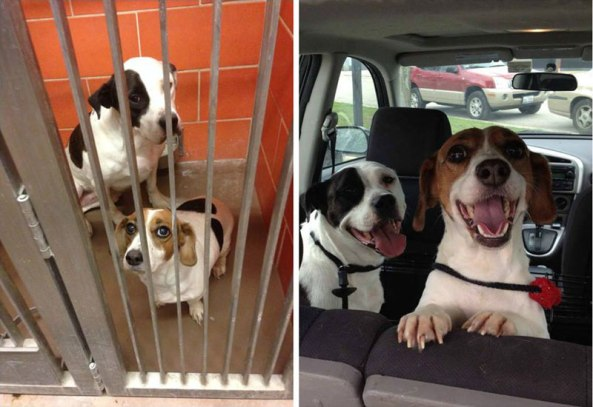 two-dogs-adoption-happiness-then-and-now-sad-happy
