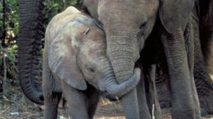 elefanten-save-serengeti