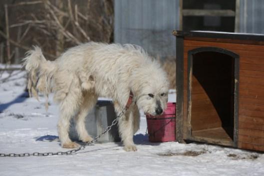 AR Puppy Mill Rescue