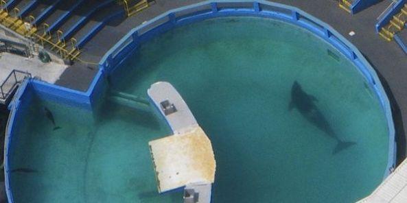 lolita pool