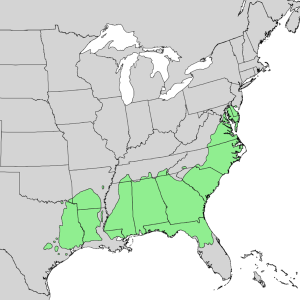 Loblolly Pine Distribution
