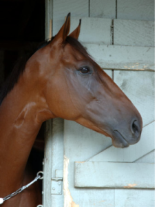 Racehorse in Profile