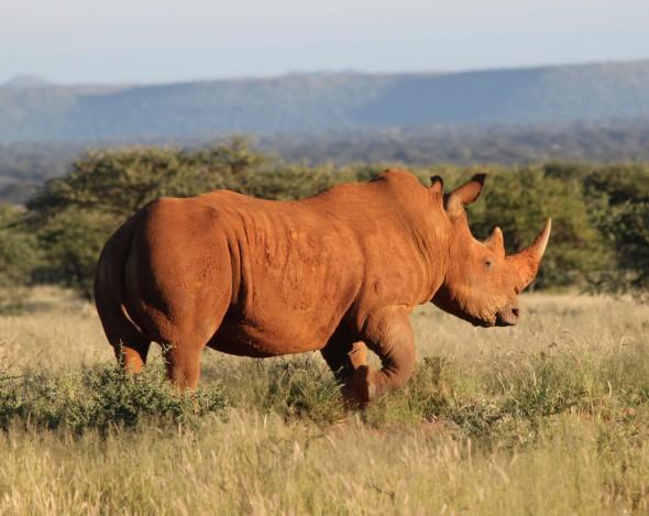 (Photo: courtesy of IUCN/ David Shepherd Wildlife Foundation)
