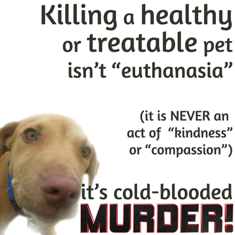 """The myth that is """"pet overpopulation"""" has been DISPROVEN. ALL healthy/treatable Pets CAN and SHOULD be saved. No Kill is the way to save them."""