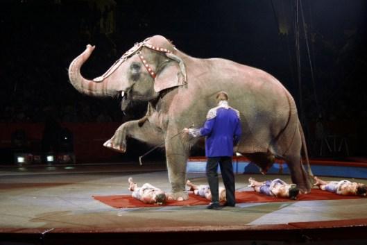 circus2-1200x800