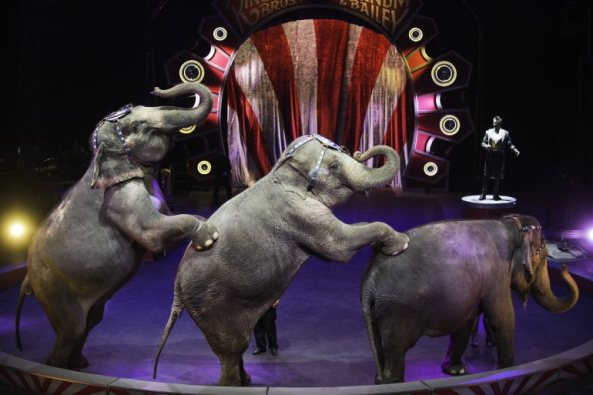 The Ringling Brothers and Barnum and Bailey Circus went on Thursday night in Hartford without the act that left nine performers hurt.