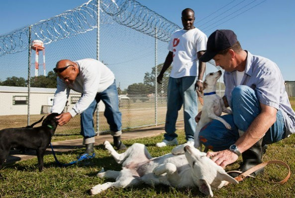 dixon-prison-and-dogs-592x399