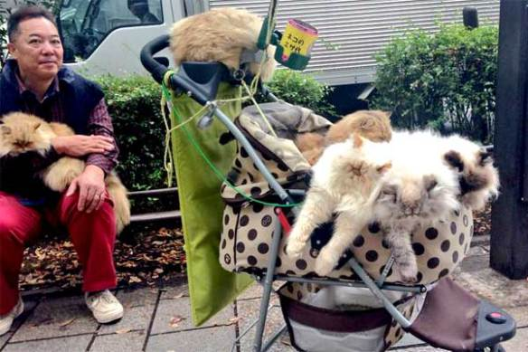 Japan, Cats, Japans Cat man, Japans Cat culture, Cat cafes, Cat Island, Equality for Cats, Masahiko Suga,
