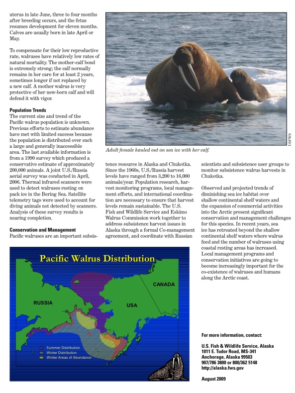 Pacific Walrus U.S. Fish & Wildlife Service, p. 2