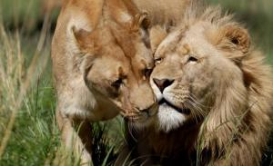 Canned-hunting-thank-you