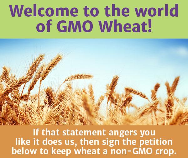 Keep_wheat_non-GMO