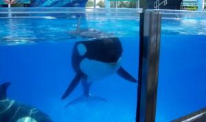 orca-sw-e1437614676113