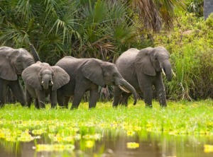advo_elephant