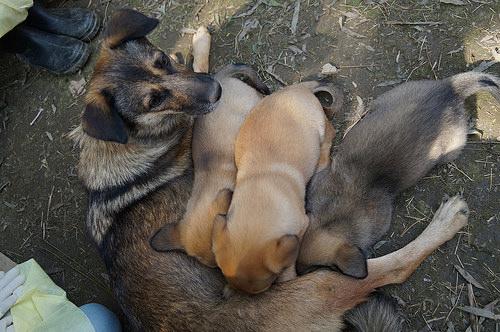 animals asia pups buried 3