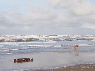 briard-on-the-beach-by-carsten-aus-bonn-310x233