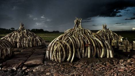 10000 dead elephants keny burn