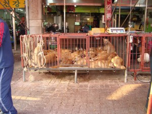 tmp_7979-Dog-meat-market-in-Seoul-300x225-323965178