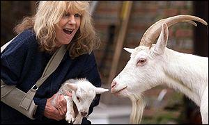 carla feeds goats