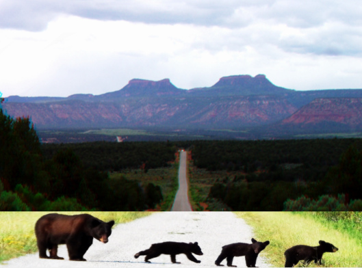 Bear Ears USGS; Black Bears UFWS