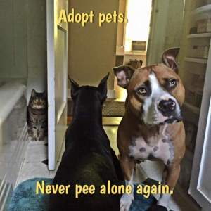 tmp_23501-adopt-never-pee-alone-again874165287