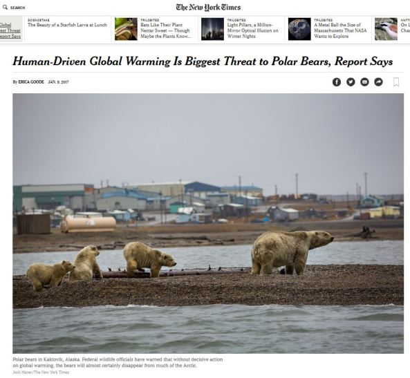 biggest-threat-to-polar-bears-is-global-warming-nyt-headline_9-jan-2017