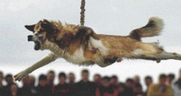 dog_torture