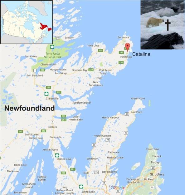 Catalina map and bear shot location Nfld