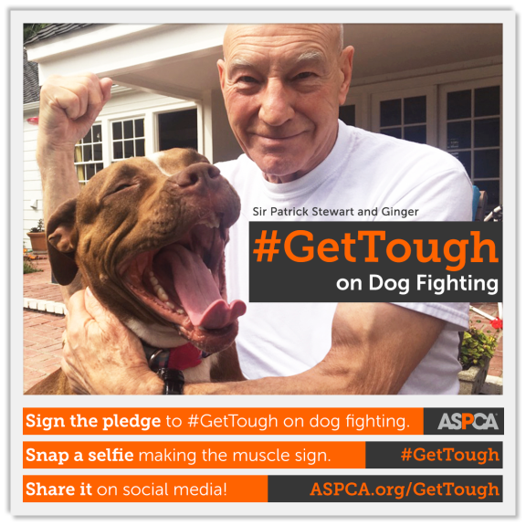 GetTough ASPCA campaign