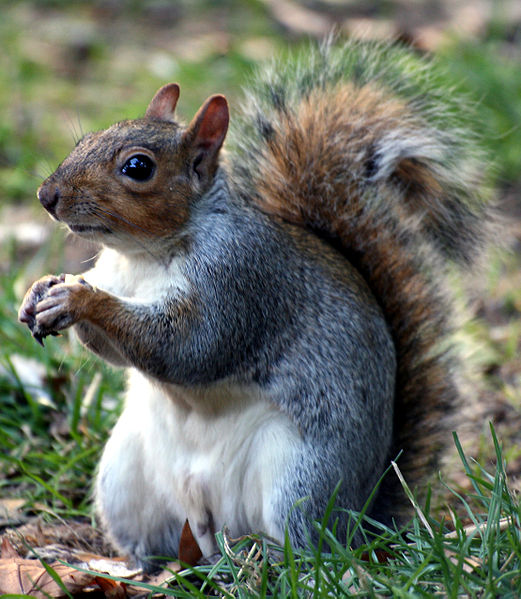 tmp_7395-squirrel_openspaces_keven_law-119261299