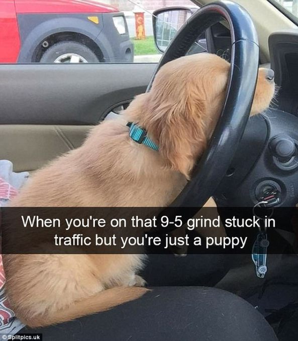 dog_driving_resting