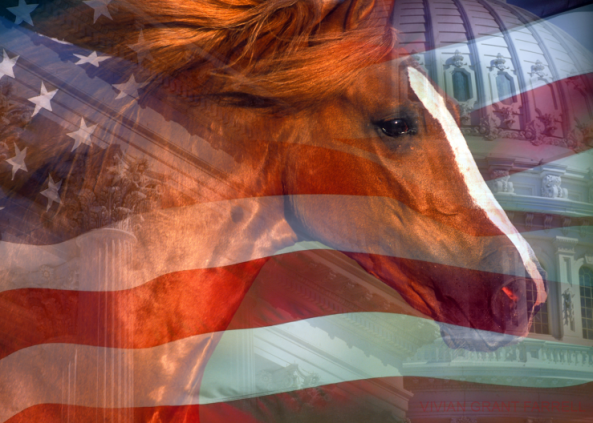 Fund Horse, US Flag and Capitol Dome. Vivian Grant Farrell.