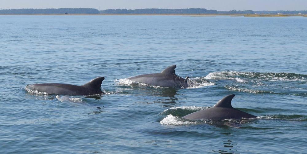 Bottlenose Dolphin (Brian Lockwood)