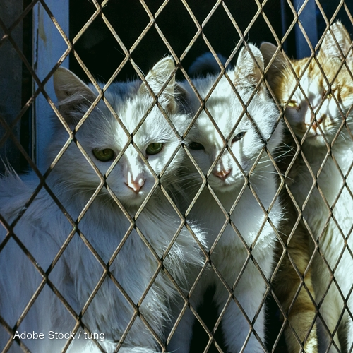 three cats trap and is stuck in a steel wire netting,cage,hoping for freedom with sad feeling